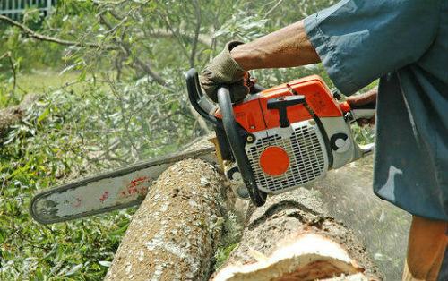 Tractor Man On Cutting Trees : Tree cutting felling tips down a