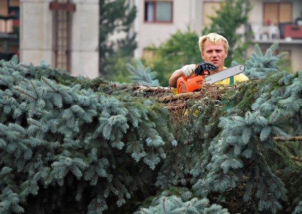 DIY tree cutting
