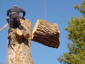 How Much Does Tree Removal Cost Tree Removal