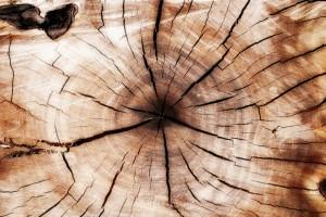 Essing A Tree Stump