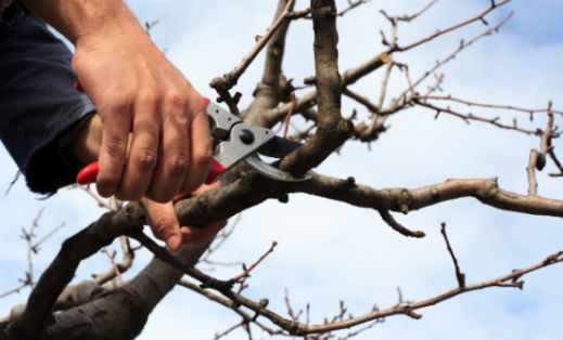 Tree Trimming & Pruning Tips