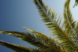 Palm Tree T Costs