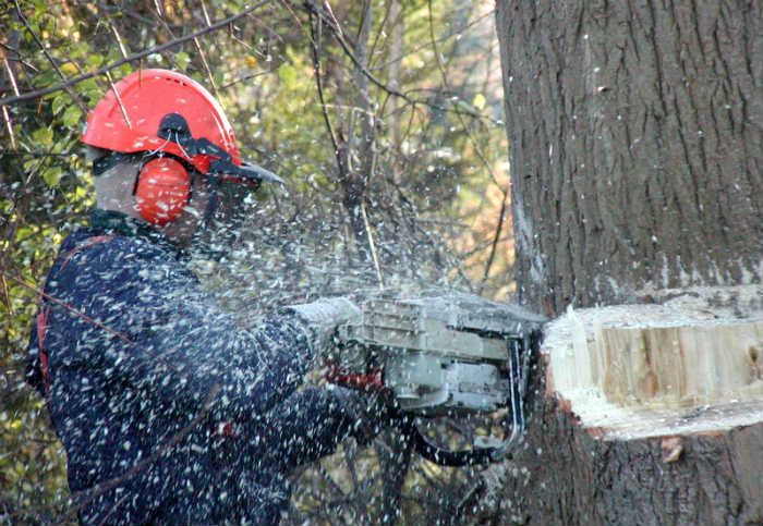 Tractor Man On Cutting Trees : Tree cutting removal equipment