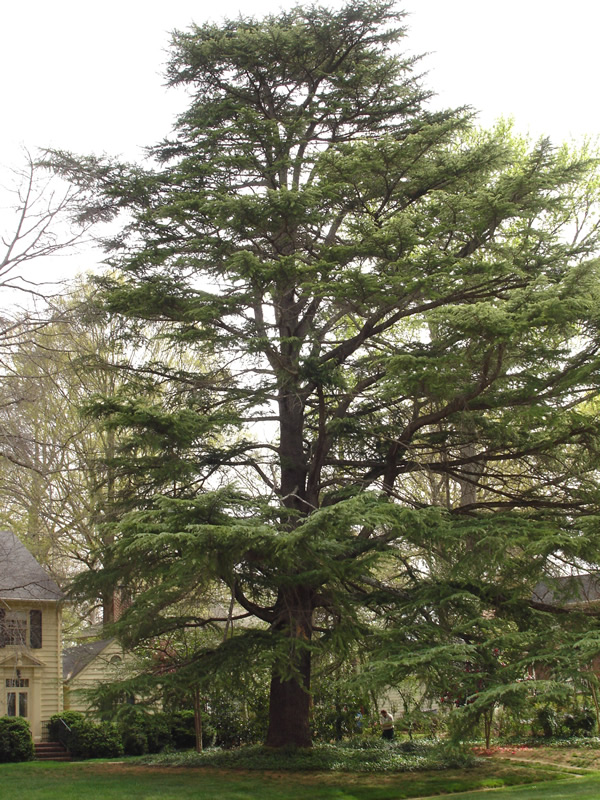 Tree Services In Charlotte Tree Amp Stump Removal Costs Etc