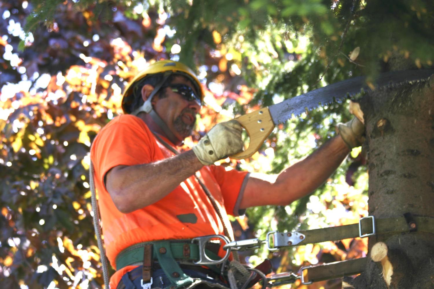 Tree Cutting Accidents | Common Tree Trimming Injuries, Techniques