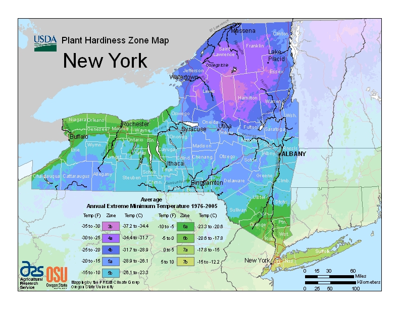 New York plant hardiness zones map