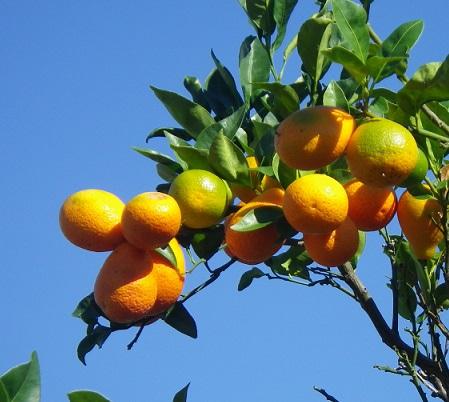 orange leaves quotes