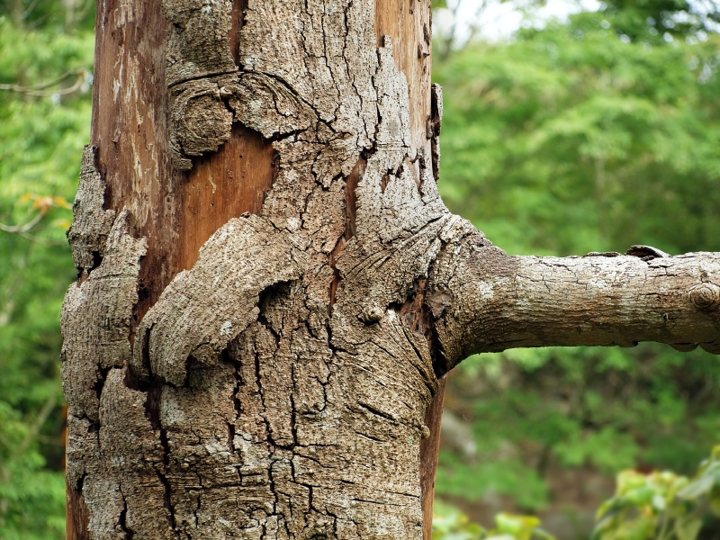 A Guide To Common Tree Diseases