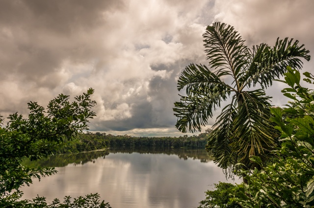Palms in the Amazon